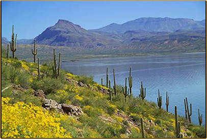 The arizona fishing guides roosevelt lake for Arizona fishing guides